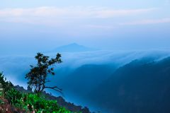 Чувствуйте природу с туманным утром стоковая фотография