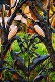 Чугунная загородка с Cornstalk стоковая фотография rf