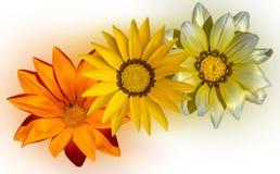 Чудесная желтая маргаритка стоковое изображение rf