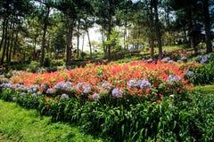 Чудесное малое растущее розовых и белых цветков в парке Стоковые Изображения