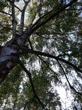 Чудесное старое дерево в городке Storkow в GermanyBeautiful покрасило листья в городке Storkow в Германии стоковое фото