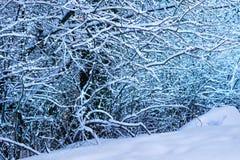 Чудесный белый лес на зиме Ландшафт wintertime сценарный стоковые изображения rf
