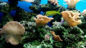 Чудесный красочный и красивый подводный мир с кораллами и тропическими рыбами акции видеоматериалы