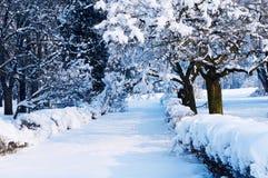 Чудесный ландшафт зимы Стоковые Изображения RF