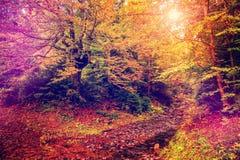 Чудесный ландшафт осени высокие деревья на горном склоне с желтым цветом a стоковое изображение