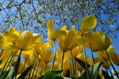 Чудесный мир цветков в keukenhof садовничает Нидерланды Стоковые Фото