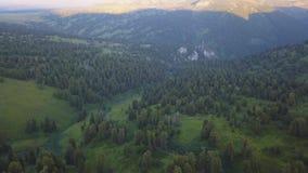 Чудесный полет к красивой долине с лесом в горах зажим Красивая зеленая долина окруженная мимо сток-видео