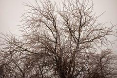 Чуть-чуть безлистные ветви лиственного дерева Стоковое Изображение