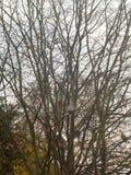 Чуть-чуть ветви дерева в небе осени overcast с птицами садились на насест Стоковые Фото