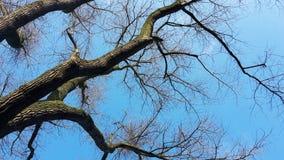 Чуть-чуть ветви дерева против голубого неба Стоковые Изображения