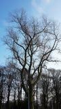 Чуть-чуть ветви дерева против голубого неба Стоковое фото RF