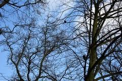 Чуть-чуть ветви дерева против голубого неба Стоковая Фотография