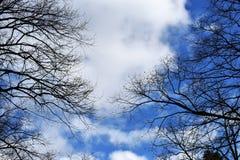 Чуть-чуть ветви дерева против голубого неба Стоковое Изображение