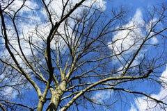 Чуть-чуть ветви дерева против голубого неба Стоковые Фото