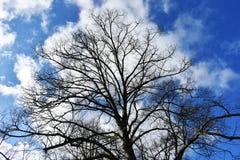 Чуть-чуть ветви дерева против голубого неба Стоковое Изображение RF