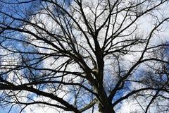 Чуть-чуть ветви дерева против голубого неба Стоковое Фото