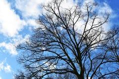 Чуть-чуть ветви дерева против голубого неба Стоковые Фотографии RF