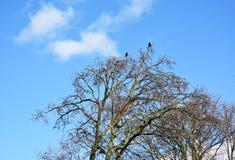 Чуть-чуть ветви дерева против голубого неба Стоковые Изображения RF
