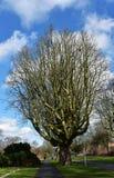Чуть-чуть ветви дерева против голубого неба Стоковая Фотография RF