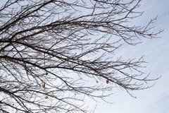 Чуть-чуть ветви дерева против неба утра Стоковое Изображение RF