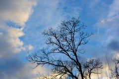 Чуть-чуть дерево в силуэте осени стоковые фотографии rf