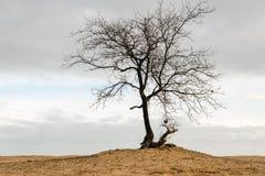 Чуть-чуть дерево против пасмурного серого неба Стоковое фото RF