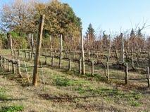 Чуть-чуть поле виноградника в зиме Италия Тоскана Стоковое Фото