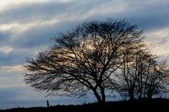 Чуть-чуть силуэт дерева против пасмурного неба вечера Стоковое Изображение RF
