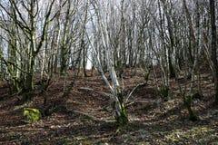 Чуть-чуть сцена полесья зимы дерева Стоковое фото RF