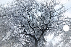 Чуть-чуть ветви деревьев зимы стоковые фотографии rf