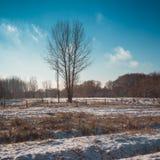 Чуть-чуть дерево в снеге покрыло поле фермы на солнечный день Стоковое Фото