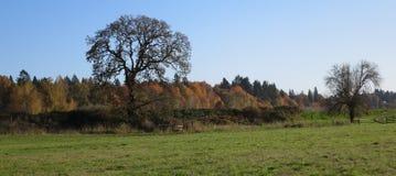 Чуть-чуть деревья и цвета падения как предпосылка стоковое фото rf