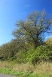 Чуть-чуть деревья с некоторыми зелеными кустами стоковое изображение rf