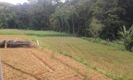 Чуть-чуть земли перед культивированием в Ambegoda Стоковые Изображения