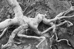 Чуть-чуть корни стоковые изображения rf