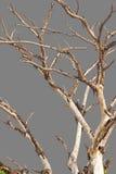Чуть-чуть предпосылка серого цвета ветвей Стоковая Фотография