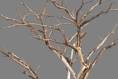 Чуть-чуть предпосылка серого цвета ветвей Стоковое Изображение RF