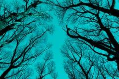 Чуть-чуть силуэт ветвей против cyan голубого неба Стоковое Фото