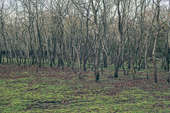 Чуть-чуть стволы дерева на луге покрытом с листьями осени Стоковое Изображение