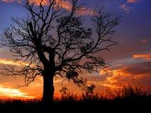 Чуть-чуть дуб на сумраке Стоковая Фотография RF