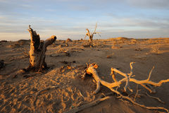 Чуть-чуть деревья в рассвете осени Стоковое Изображение RF