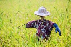 Чучело было настроено в золотом поле риса Таиланда, золотого расплывчатого зерна риса в переднем плане и предпосылке стоковое фото rf