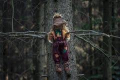 Чучело в дереве в затеняемом лесе стоковое изображение rf
