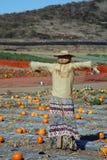 чучело тыквы заплаты Стоковая Фотография RF