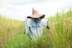 чучело ricefield Стоковые Изображения RF