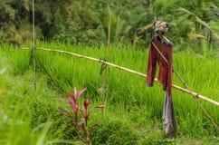 чучело в поле риса Стоковое Фото