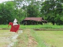 Чучело в полях и лачугах риса Таиланд Стоковое Изображение