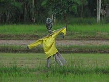 Чучело в рисе Таиланд Стоковое Фото