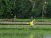 Чучело в рисе Таиланд Стоковое Изображение