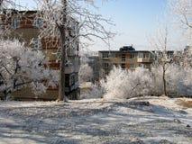 Чудеса природы зимы Стоковое Изображение RF